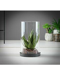 فازة صبار Cactus in Crystal