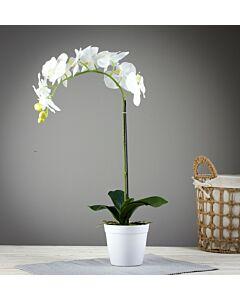 فازة ورد White Orchid