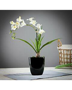 فازة ورد White Flower
