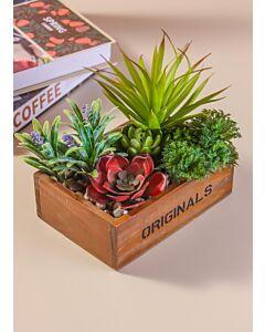 نباتات بقاعدة خشب 36 حبة دلهي