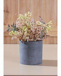 زرع زهور فيولا