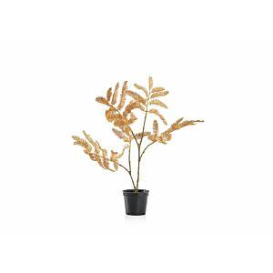 نبات صناعى لاسيلس