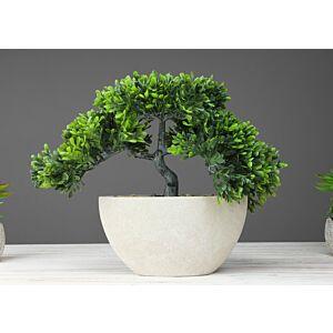 شجرة Bonsai tree