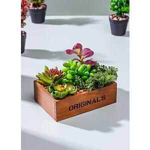 نباتات كالا - لون أخضر