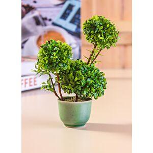أشجار ليندن - خضراء