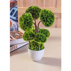 أشجار أكاسيا - خضراء