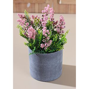 زرع زهور ماغنوليا